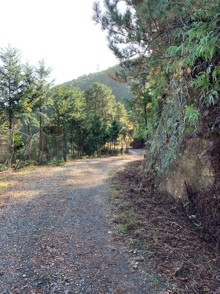 便石山のひらけた林道