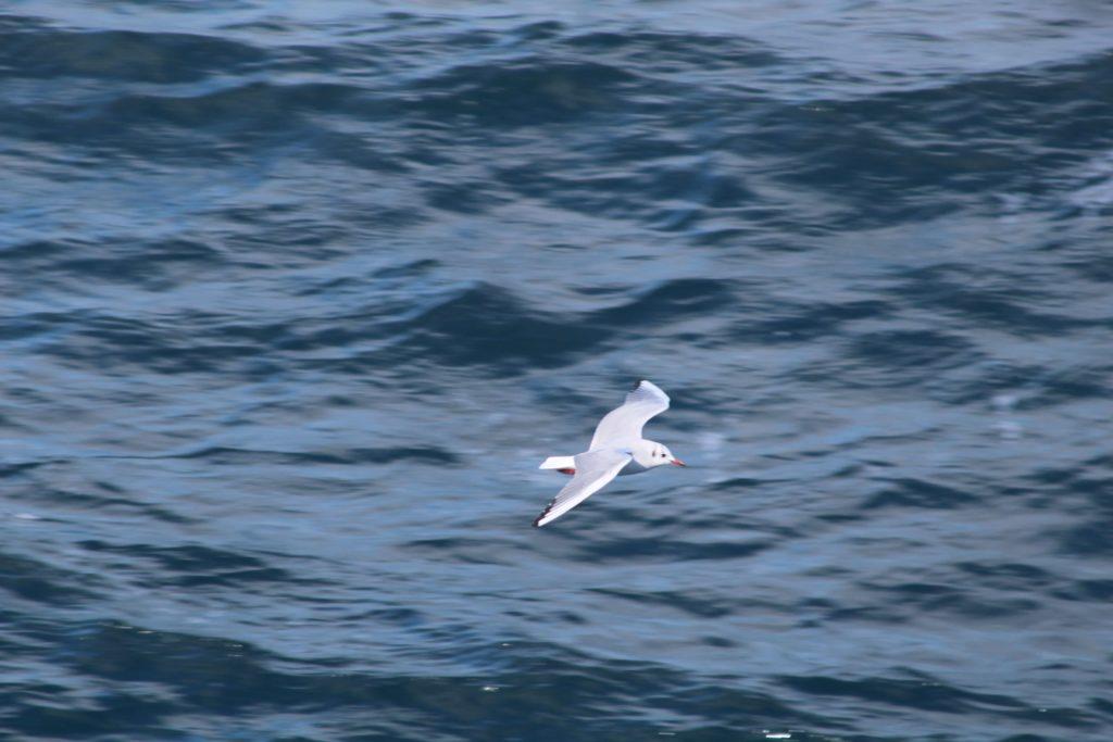 大海のカモメ2
