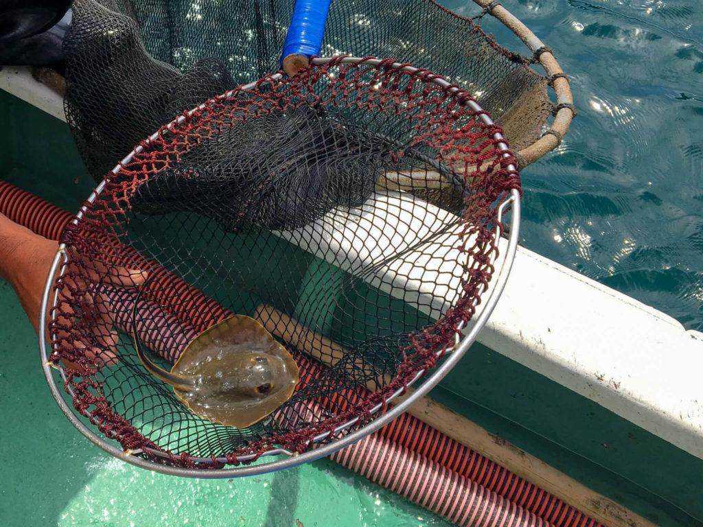 漁師体験小さなエイ