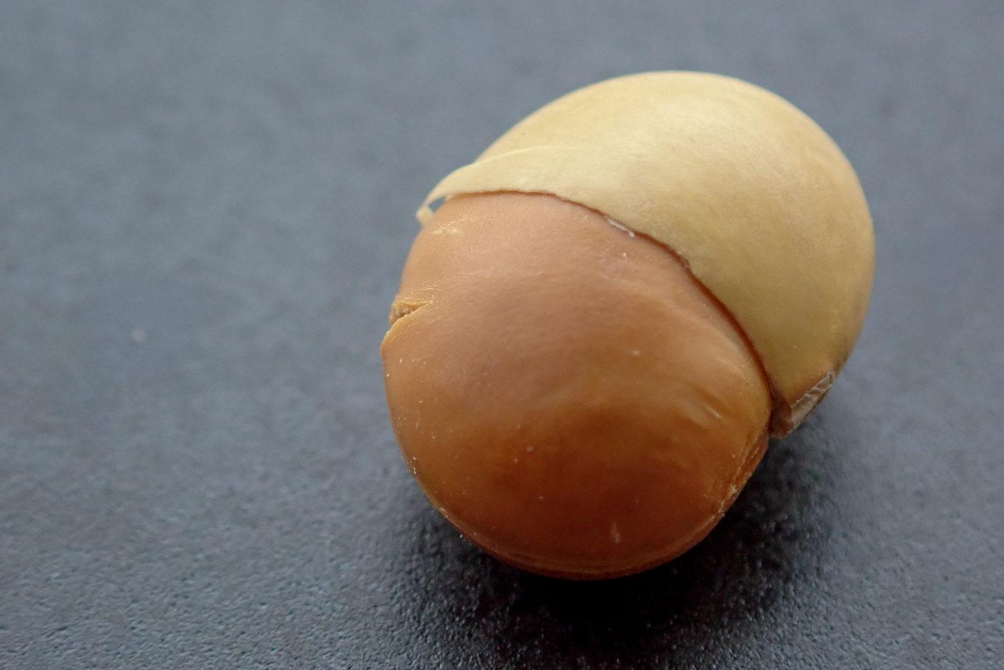 どんぐりみたいな嬉野大豆1