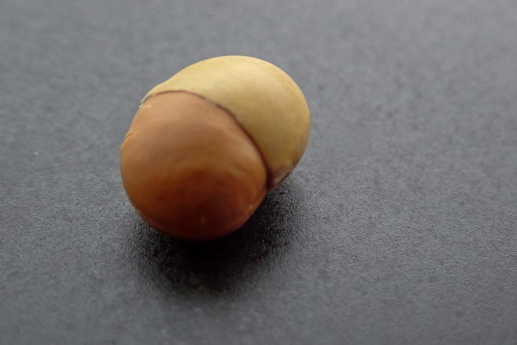 どんぐりみたいな嬉野大豆2