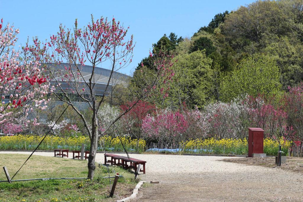 サンアリーナ花の広場 ベンチ