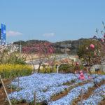 サンアリーナ花の広場 花桃と城