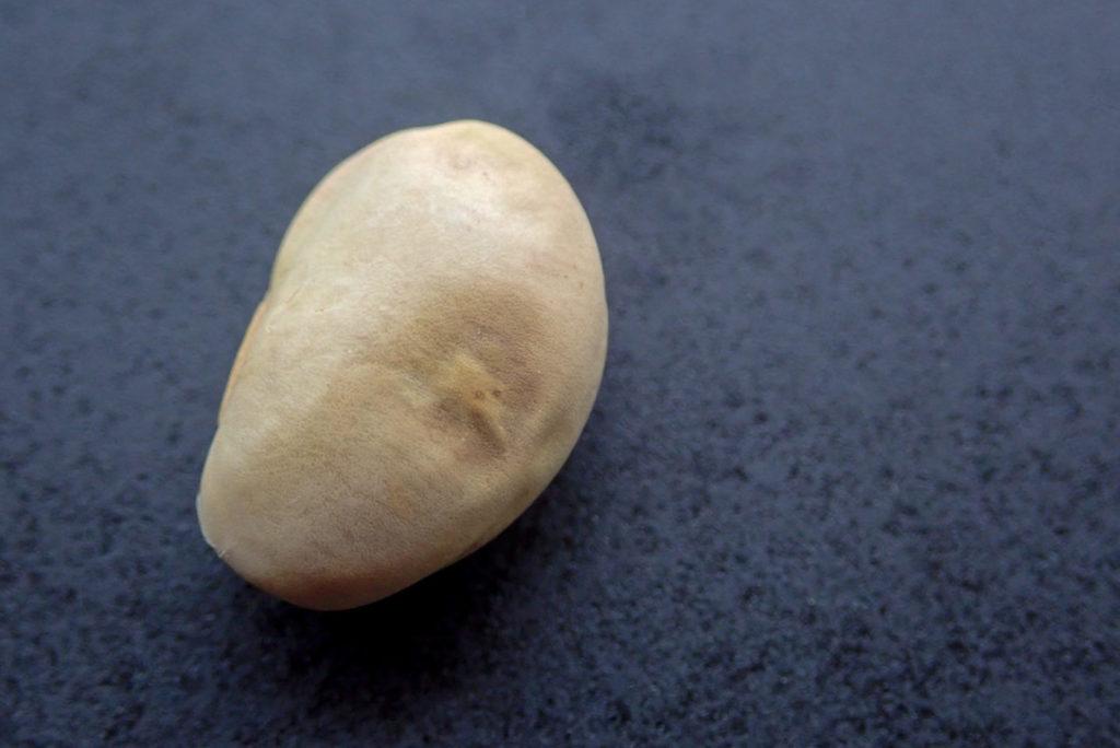 殻に閉じこもった嬉野大豆