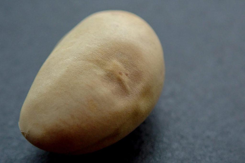 殻に閉じこもった嬉野大豆1