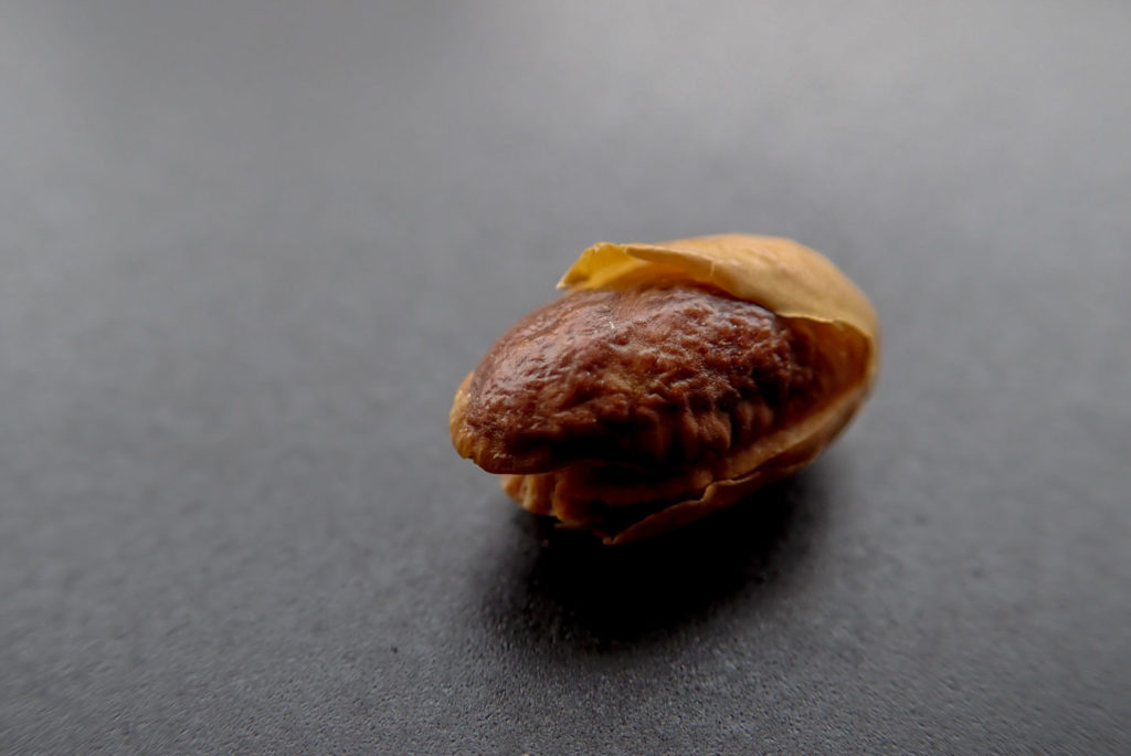 焼きすぎた嬉野大豆1