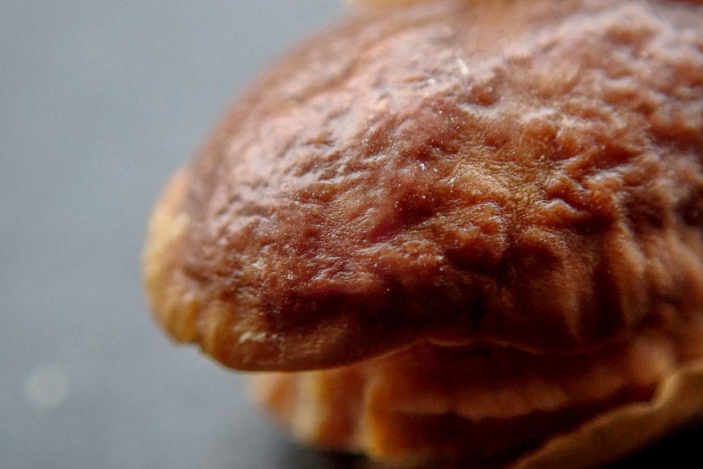 焼きすぎた嬉野大豆2