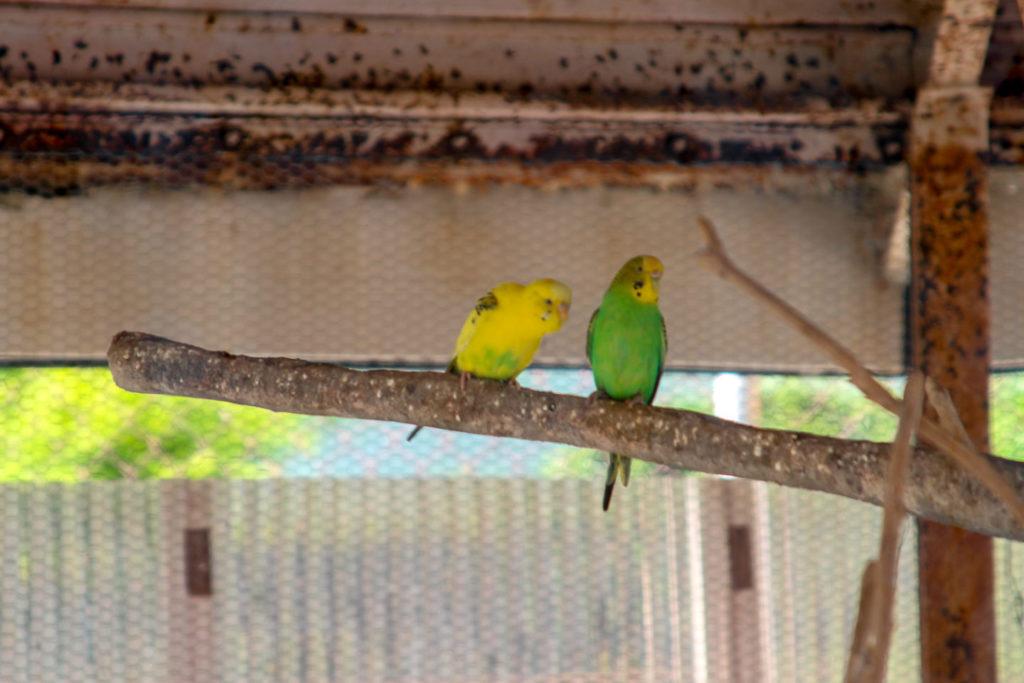 鳥羽市民の森公園 動物2