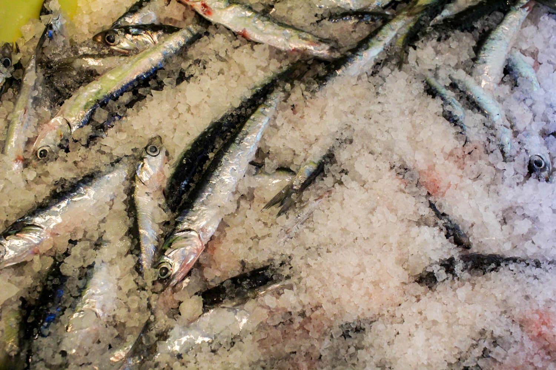 海童工房 魚寅さん カタクチイワシのアンチョビー仕込み風景