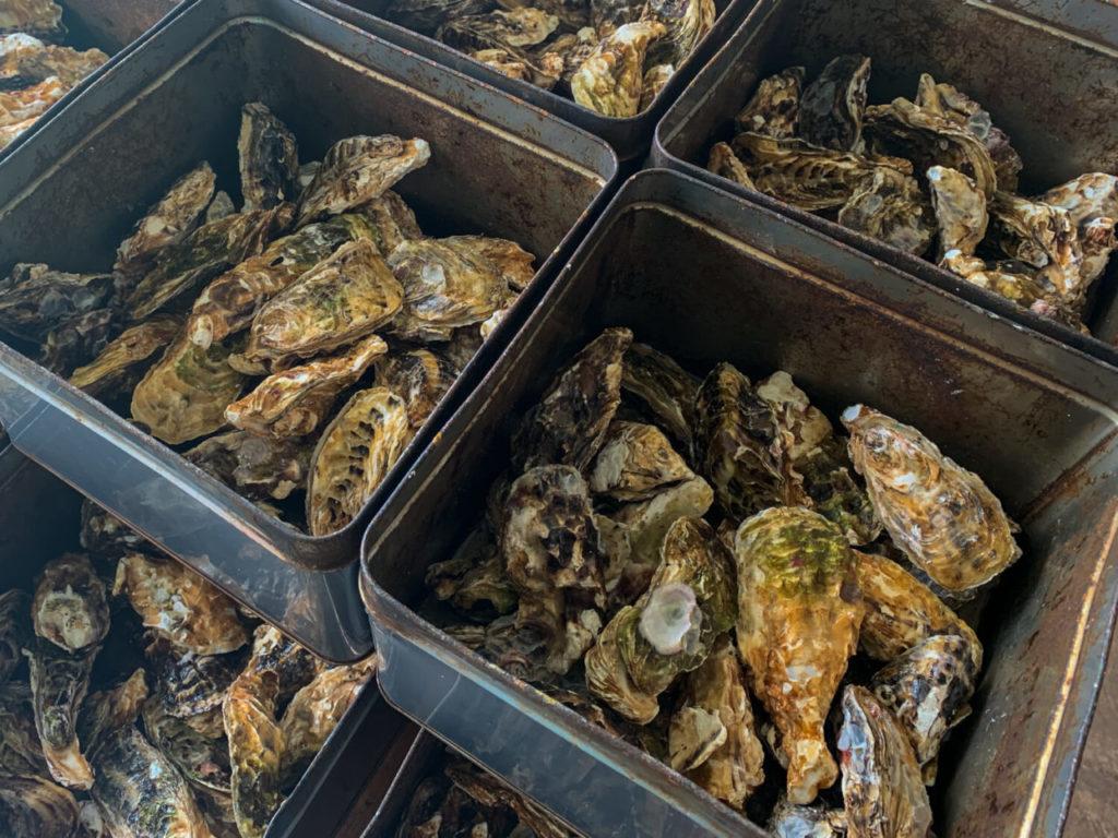オイスターファーム山善 蒸し牡蠣 蒸し場の様子5