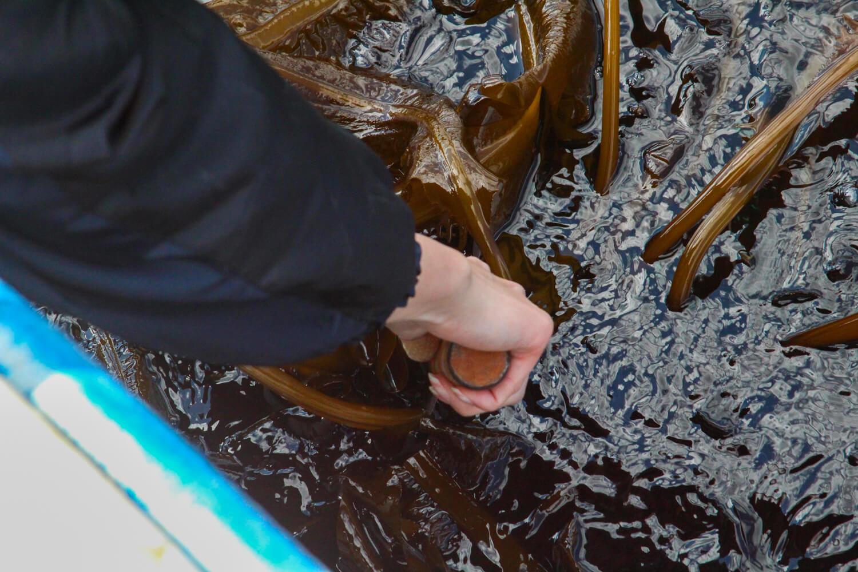Anchor. 漁師の貸切アジト ワカメ刈り