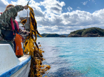 Anchor. 漁師の貸切アジト 漁村体験 ワカメ刈り