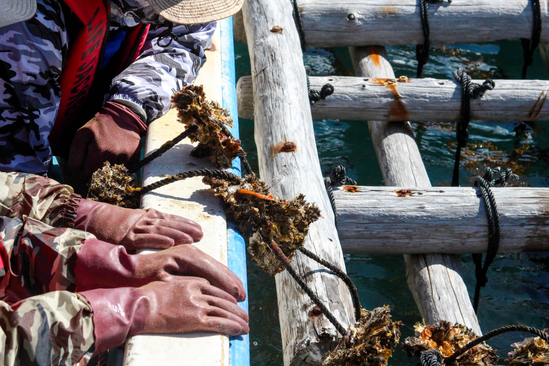 Anchor. 漁師の貸切アジト 牡蠣養殖見学